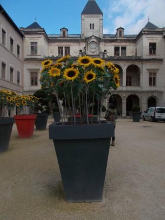 Hôtel de ville, Vienne