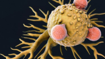 Close-up image of a T-Lymphocyte and Cancer Cell