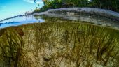 Seagrass in the Wakatobi National Park
