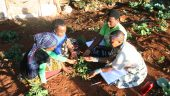 Hierarchies of knowledge: Ethnobotanical knowledge, practices and cosmology of the Venda in South Africa