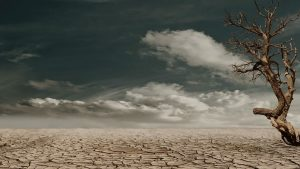Image of arid desert